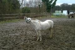Pony-Glossy